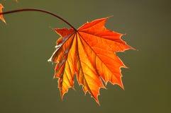 листья 2 новые Стоковая Фотография