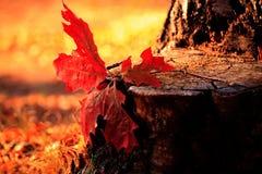 Листья 2 осени Стоковая Фотография RF
