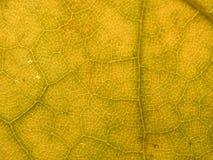 листья 2 предпосылок Стоковая Фотография
