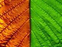 листья 2 стороны Стоковые Фото