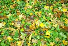 Листья Стоковое фото RF