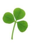 листья 3 клевера Стоковые Фотографии RF