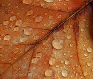 листья 3 Стоковые Фото