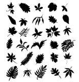 листья 3 Стоковые Изображения RF