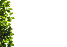 Листья Стоковое Изображение