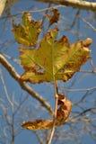Листья Стоковые Изображения