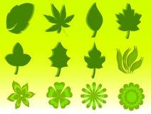 листья иллюстрация штока