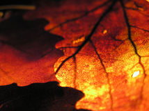 листья Стоковая Фотография