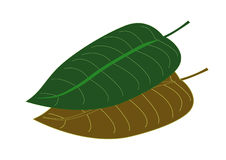 Листья Стоковые Изображения RF