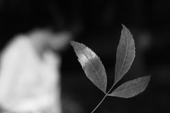листья Стоковая Фотография RF