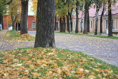 листья Стоковые Фото