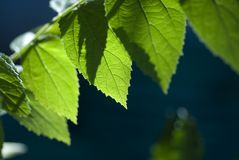 листья Стоковое Фото