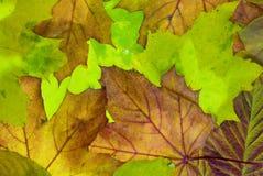 листья autu Стоковые Изображения