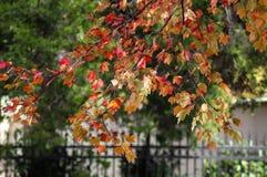 Листья Autum против железного fene Стоковые Фото