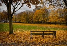 листья autum стенда Стоковое фото RF