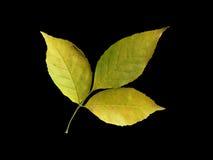 листья autum Стоковые Фото