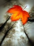 листья autum Стоковые Изображения