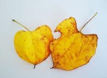 Листья Autum Стоковое Изображение
