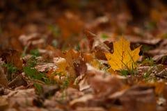 Листья Autumm Стоковая Фотография RF