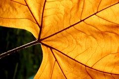листья autums Стоковые Фотографии RF