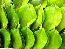 листья betle Стоковые Изображения