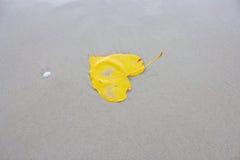 Листья Bodhi на пляже Стоковая Фотография RF