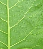 листья burdock предпосылки Стоковое Изображение RF