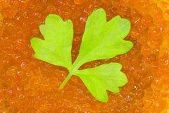 Листья Cilantro и красная икра стоковое изображение rf
