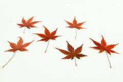 листья colorfull Стоковое Изображение RF