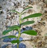 листья cowberry стоковая фотография