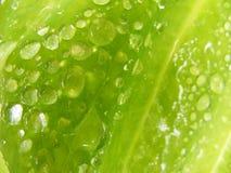 листья detai Стоковое Фото