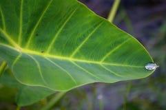 листья dewdrop Стоковые Изображения RF