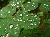 листья dewdrop Стоковое Фото
