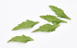 Листья Epazote Стоковое фото RF