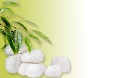 листья ficus над камнями белыми Стоковое Фото