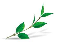 Листья Frond Стоковое фото RF