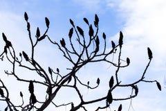 Листья Frost Стоковые Фото