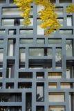 листья gingko напольные стоковое изображение rf