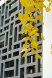 листья gingko напольные стоковое фото rf