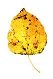 листья gleam Стоковое Фото
