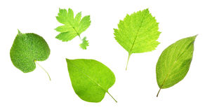 листья gleam Стоковое фото RF