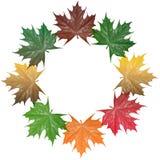 листья goldautumn Стоковые Фотографии RF