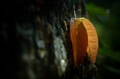 Листья Golder Стоковые Изображения RF
