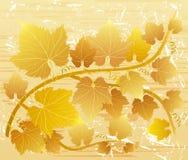листья grunge виноградины Стоковое Изображение