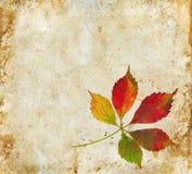 листья grunge падения предпосылки иллюстрация штока