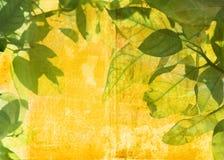 листья grunge предпосылки Стоковые Изображения