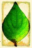 листья grunge Стоковое фото RF