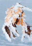 листья hoarfrost стоковые фото