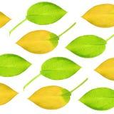 листья hosta конструкции Стоковая Фотография RF