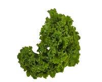 Листья Kale Стоковые Изображения RF